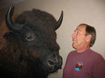 Will and buffalo